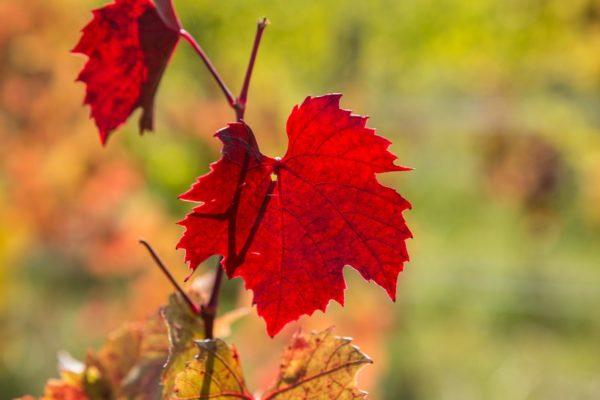 les couleurs d'automnes du Beaujolais durant notre cours de photographie d'octobre