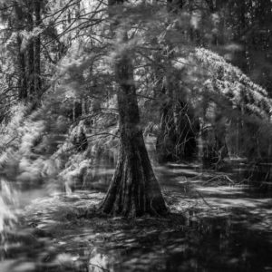 cours photo arbre et nature